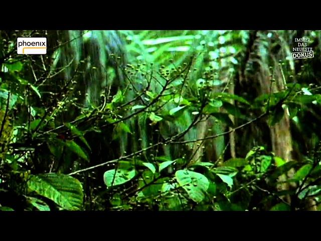 Dschungel