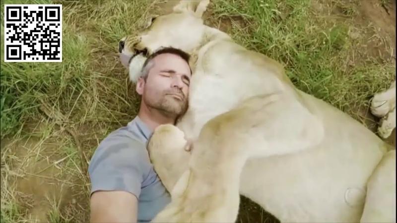 Leoa dá abraço e derruba homem que salvou a vida dela. AcheiC