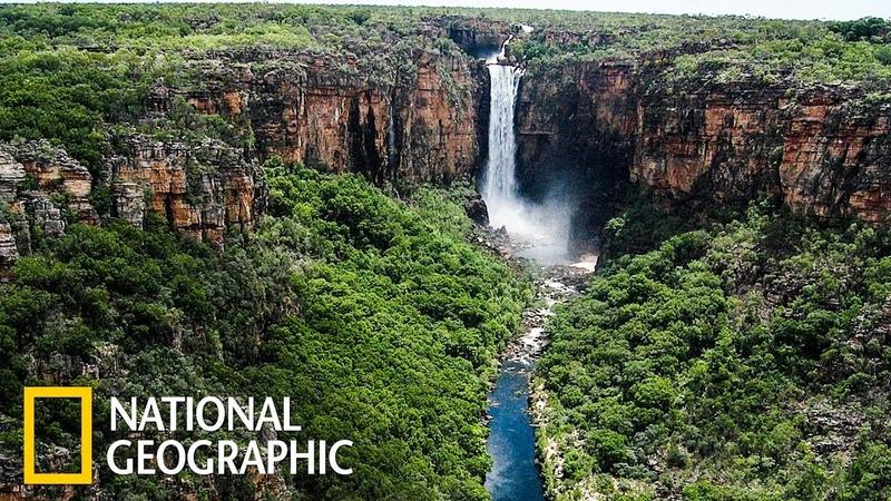 Какаду древняя природа Австралии National Geographic