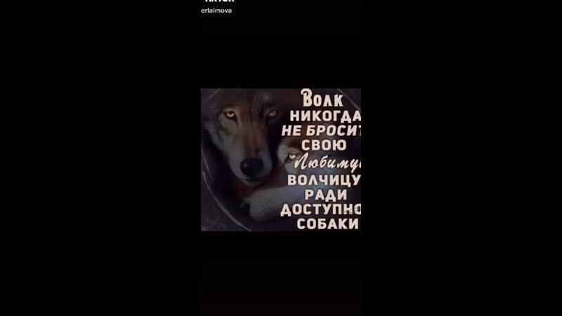волк никогда не бросит свою любимую волчицу